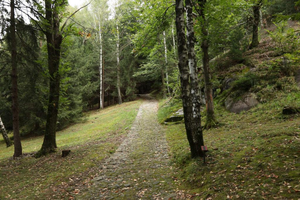 Sentiero nel bosco del Parco Nazionale delle incisioni rupestri di Valle Camonica